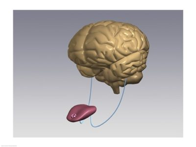 Lengua-cerebro-CULTURIZATE-400x300