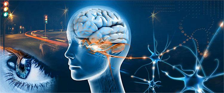 ojo-cerebro.jpg