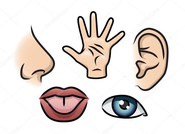 depositphotos_42221969-stock-illustration-the-five-senses.jpg