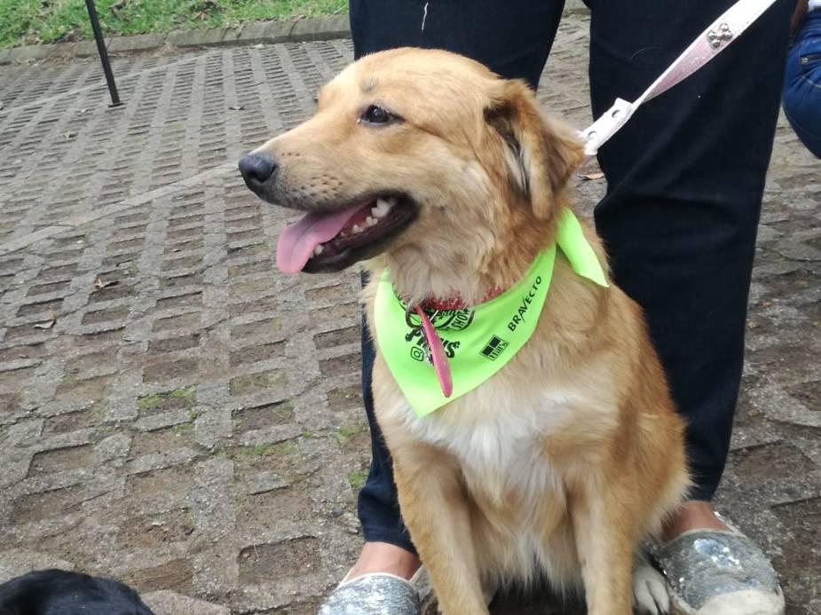 Adopción de perritos 10092018 5