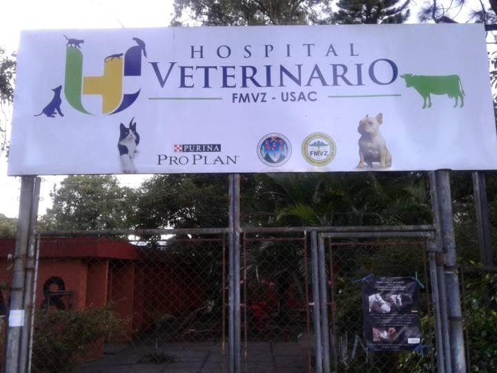 foto 4 veterinaria.jpg