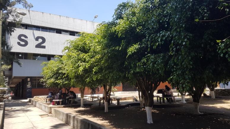 Ficus (3)