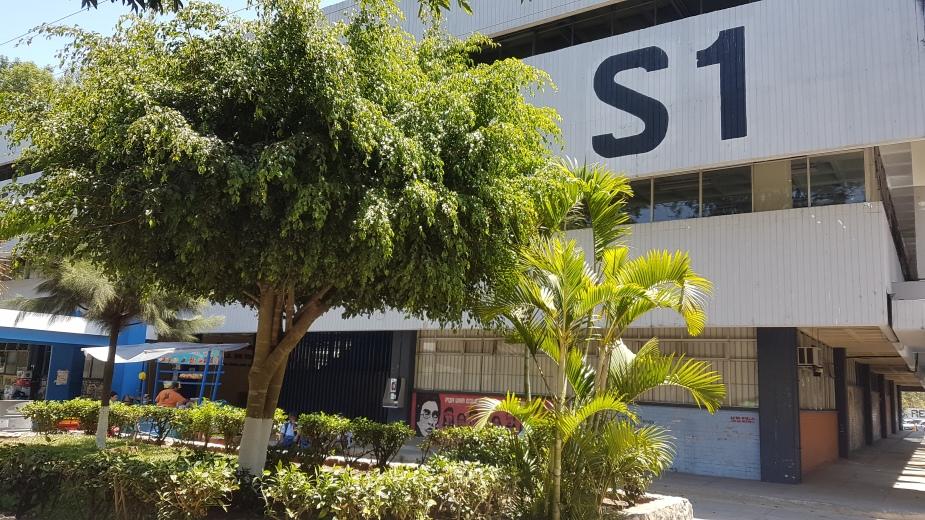 Ficus (5)