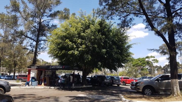 Ficus (9)