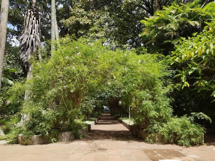 jardín botánico usac (11)
