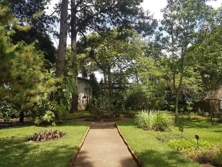 jardín botánico usac (18)