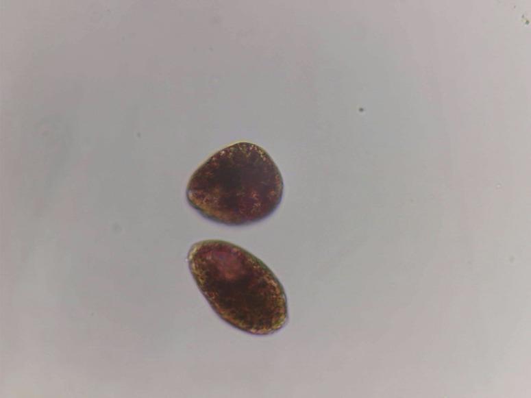 laguna de ipala rosada (2)