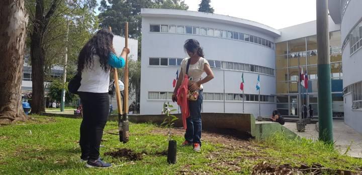 plantación árboles frutales usac (29)