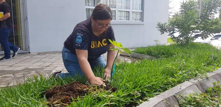 plantación árboles frutales usac (3)