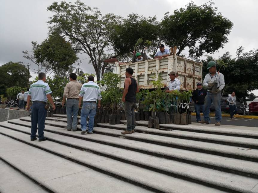 plantar arboles usac (2)