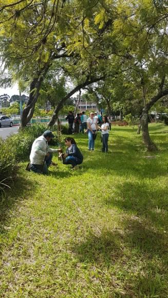 plantar arboles usac (6)